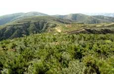 建设生态文明 陕西三北工程累计完成造林5333万亩