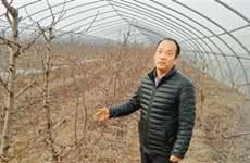 家庭农场已超千家 能否为西安乡村经济注入新活力