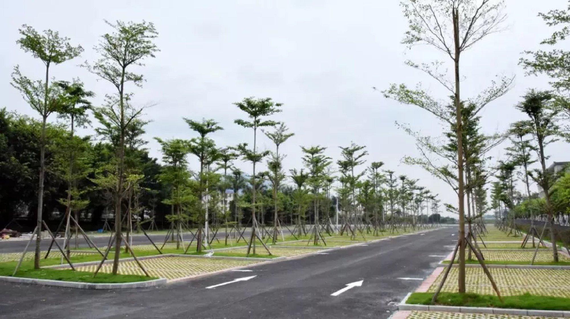 鼎湖山生态停车场,共130个停车位图片