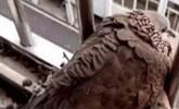 男子发现阳台有一只鸟,出差回家后,被眼前的景象惊呆