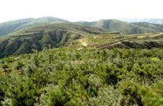 今年陕西全省将完成矿山地质环境恢复治理1万亩