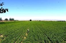 西安市完成2275个村清产核资任务 占总村数的99%