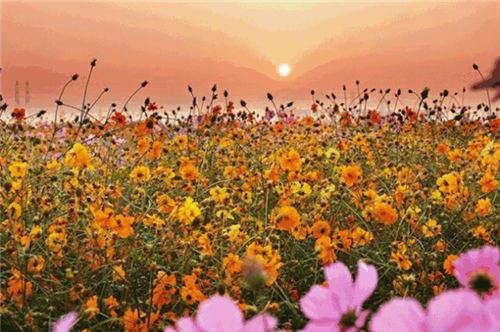 绚烂的色彩在阳光的照耀下更显亮丽,空气里都透露着迷人的芬芳,最适合