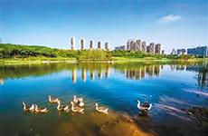 央视点赞浐灞国家湿地公园 春意盎然化身城市绿肺