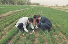 陕全力做好春季抗旱和小麦病虫防控 确保粮食生产稳定