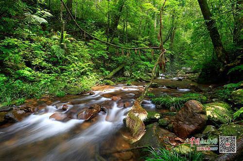 九连山入选中国最美森林:龙南境内系江西唯一上榜