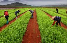 推动产业扶贫 陕西将建立中药材产业精准扶贫新模式