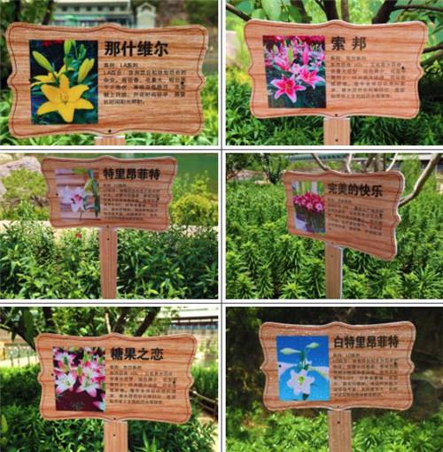 幼儿园主题墙边框百合花