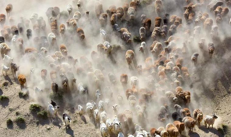 新疆阿勒泰:夏季牧场