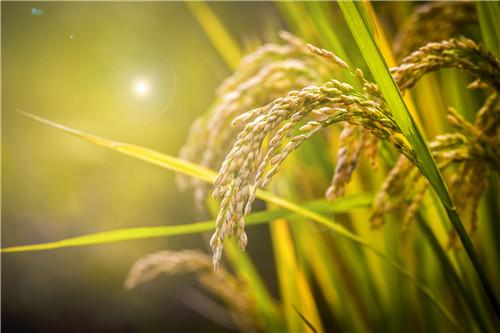山东6县首批试点农业生产社会化服务规范化建设