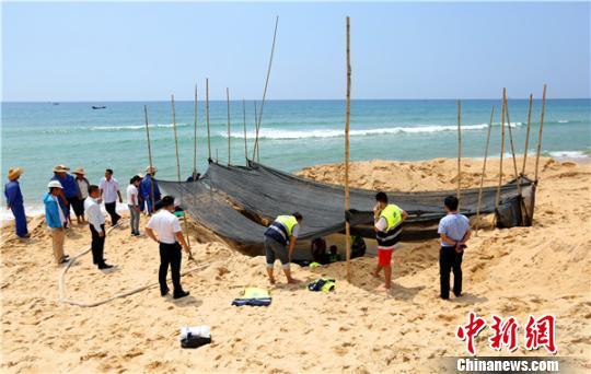 搁浅领航鲸临时救助现场。 陈思国摄