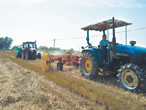 6月14日晌午,在定远县张桥镇南杨村,一台搂草机正在田间作业。