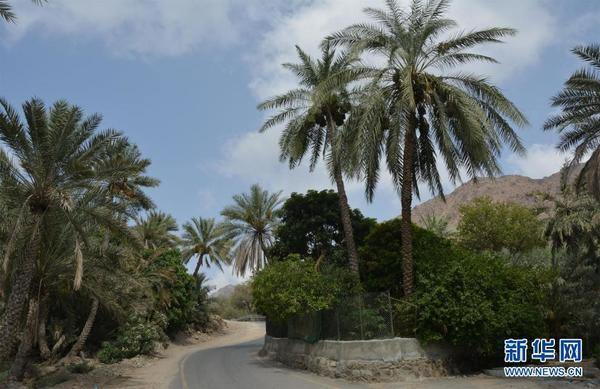 马德哈阿曼居民的农庄(图片由作者提供)