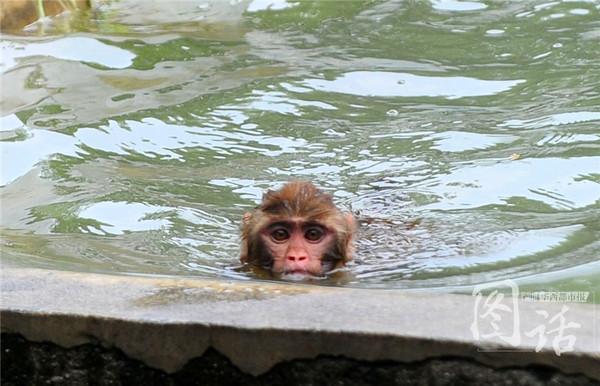 天气那么热 动物园的动物们咋过夏天的?