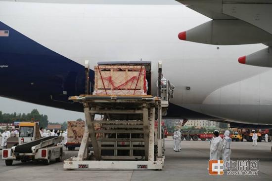 正在从飞机上运下来的澳大利亚活牛