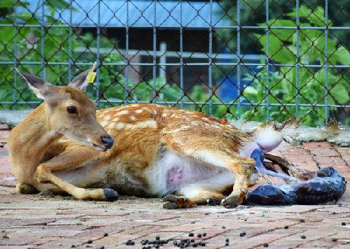中国修订野生动物保护法