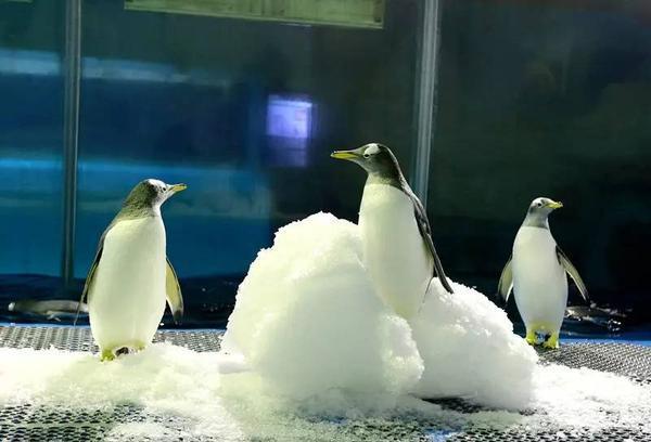 """仓鼠网友避暑有""""凉""""方!极地:好想变医院,北极熊动物咬人去什么企鹅图片"""