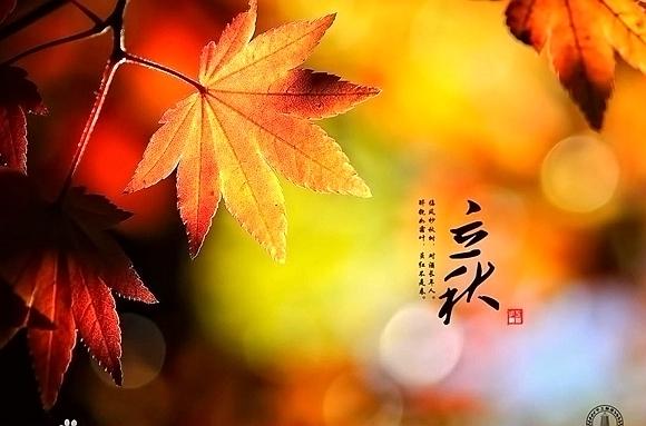 立秋梧桐树的简笔画