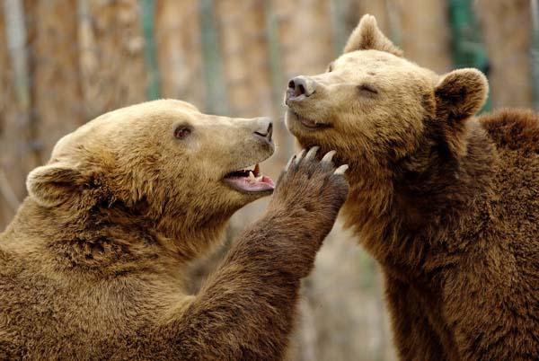 一组动物之间的温馨画面瞬间
