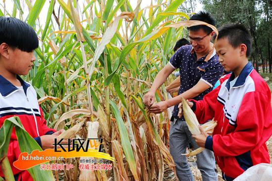 广平开展田间学农事活动 城里娃走进农田掰玉米