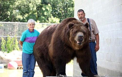 """美国夫妇收养十一个""""熊孩子"""""""