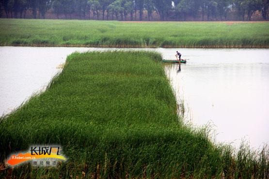 到2020年河北新建12处湿地公园 湿地保护率达42%