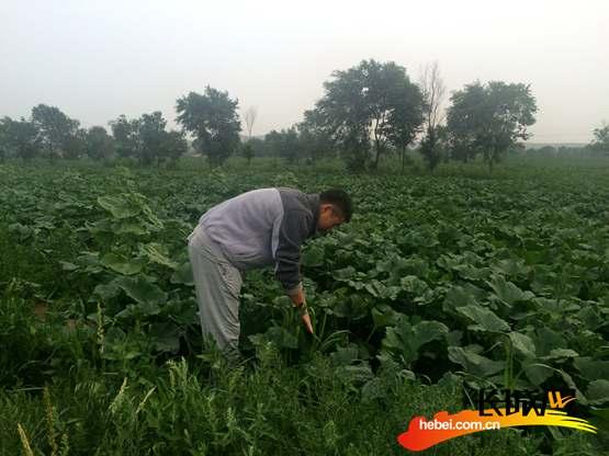 驻村工作组成员到蔬菜种植基地了解情况。杨金田 摄