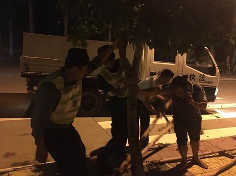 19日晚20:00新埠城管中队队员在和园林队员在平北路扶正被台风刮倒的小树