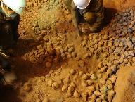 甘肃西夏时期亥母寺洞窟遗址出土大量经文残片