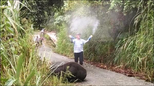 台湾一头500多公斤水牛被虎头蜂活活螫死(图)