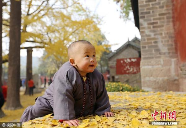 """山东寺庙现超萌""""小和尚""""吸引游客围观"""