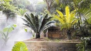 走进仙湖植物园 感受植物王国魅力