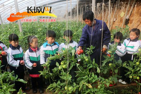 广平一小学开展田间课堂 学生们体验蔬菜种植