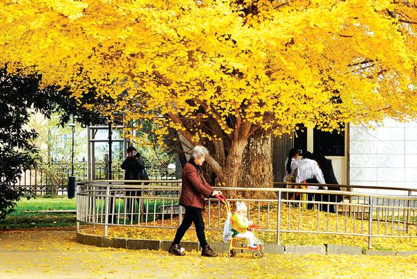 车走在银杏树下