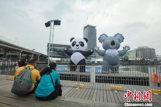 浮动熊猫考拉畅游悉尼情人港。 贺吉 摄