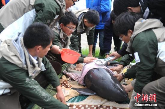 中国最大淡水湖鄱阳湖发现两头江豚:一死一伤