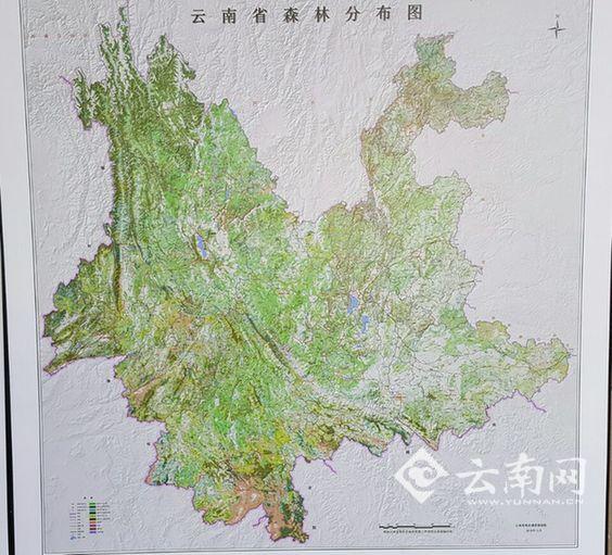 云南完成全省森林资源普查 摸清森林资源家底图片