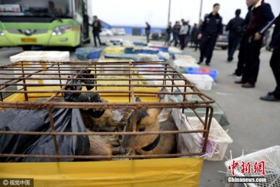 """资料图片,江西九江高速截获大巴车,车内""""坐""""150箱野生动物。图片来源:视觉中国"""