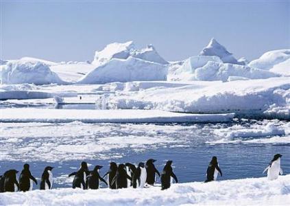 图说:南极 网络资料图