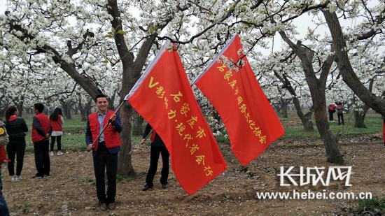 石家庄市V影响力�B现代省会行走进赵县梨花节。长城网 解哲琳 摄