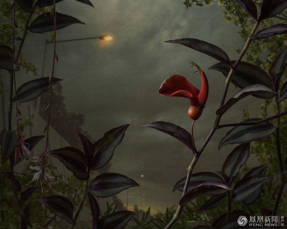 马格南获奖作品 在人类文明之下生存的植物