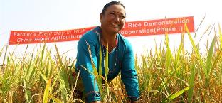 中国杂交水稻让尼泊尔农民尝到了甜头