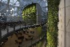 """豪砸40亿美元!亚马逊西雅图总部扩建了一片""""热带雨林"""""""
