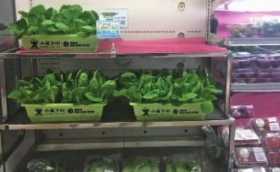 """长沙出现""""活体蔬菜""""高价叫卖 噱头还是摆设?"""