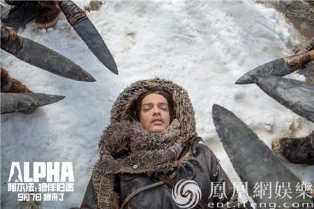 《阿尔法:狼伴归途》明日上映 吴秀波力荐史诗传奇