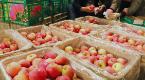 中科院苹果试验站在承德县揭牌