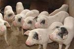 农畜牧业发展亮点纷呈