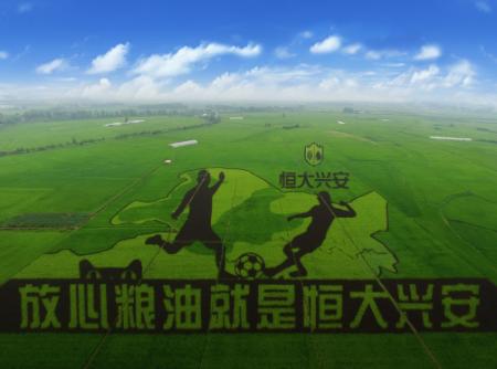 恒大足球冠军梦想打造王者之师-恒大兴安稻田巨作 引发市场关注图片