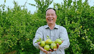 施肥原则:充分满足果树对各种营养元素的需要,提倡多施有机肥,合理施
