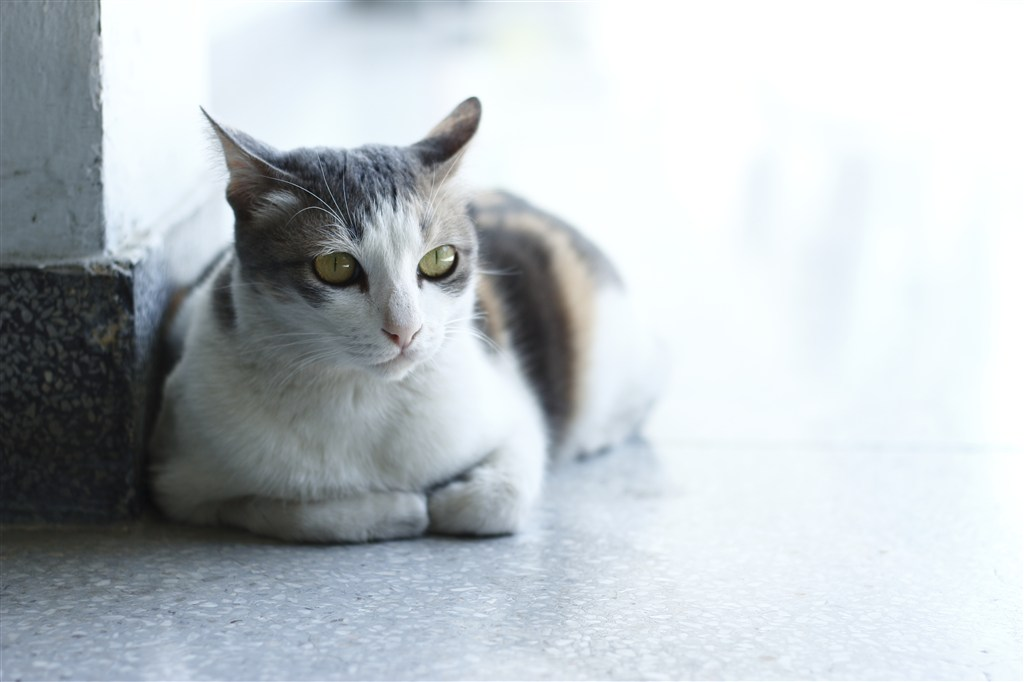 猫咪是个特别可爱的小动物